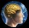 il cervello nella testa