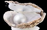 perla nell'ostrica