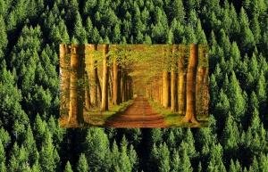 sentiero nella Vita